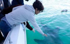 Холли Берри не боится ничего, даже акул
