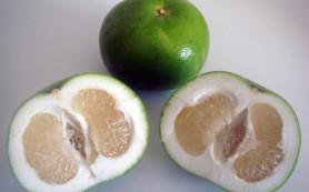 Помело: фрукт стройности и красоты