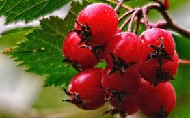 Домашняя аптека: 11 трав для быстрого похудения