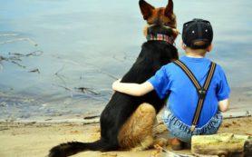 Собака как фактор воспитательного процесса