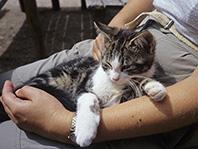 Паразит, заражающий кошек, может превратить ПМС в сущий кошмар