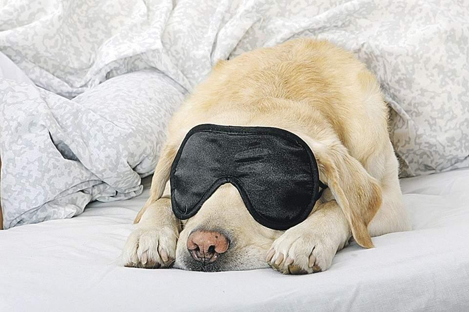 Названы продукты, хорошо и плохо влияющие на качество сна