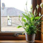 Названы самые полезные для здоровья комнатные растения