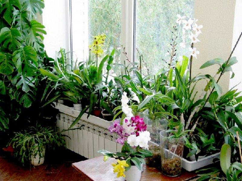 4 неожиданных преимущества комнатных растений
