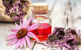Самые полезные лекарственные травы