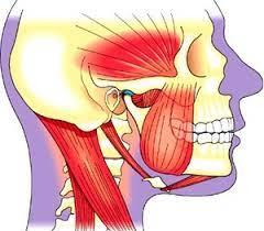 Советы остеопата: что может ваша жевательная резинка