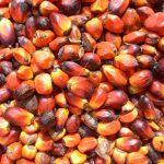 5 мифов о вреде пальмового масла, в которые пора перестать верить