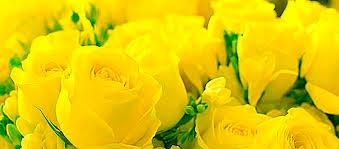 Желтый цвет и его волшебные свойства