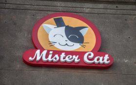 Пицца от Mister Cat